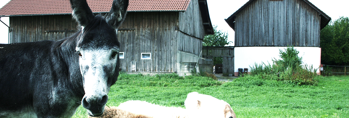 soziotherapeutischer Bauernhof